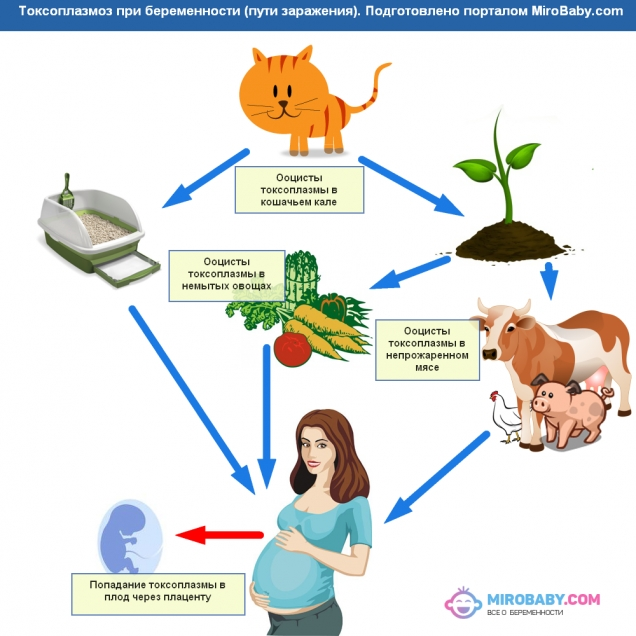 Токсоплазмоз во время беременности