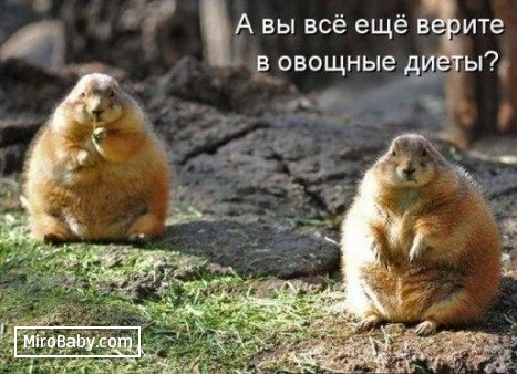http://mirobaby.com/upload/007/u799/001/18ed2464.jpg