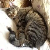 Котяша, спит на свеже выглаженной наволочке.