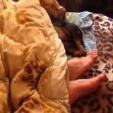 Так мы спим- солидарно с папой. Раз у папы ножки проветриваются, значит и у Джуни тоже.